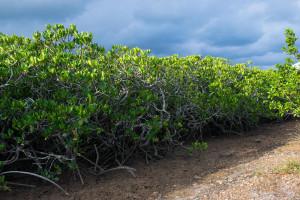 mangrove de Ouemo-0349