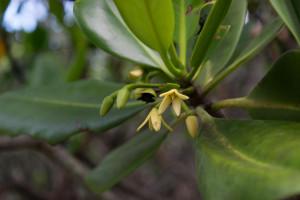 mangrove de Ouemo-0351