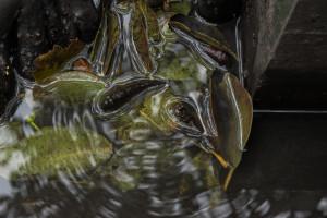 mangrove de Ouemo-0354