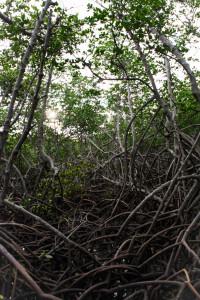 mangrove de Ouemo-0357