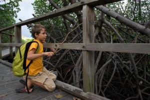 mangrove de Ouemo-0363