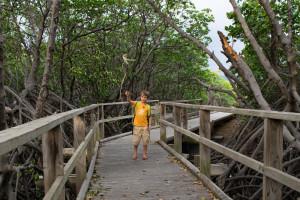 mangrove de Ouemo-0365