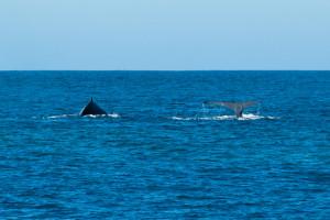 Baleines-0397-2