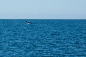 Baleines-0406