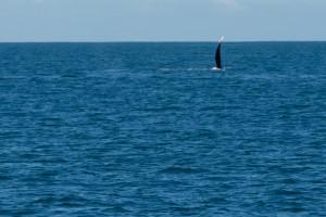Baleines-0408