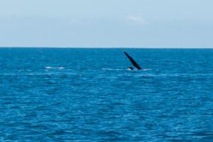 Baleines-0409