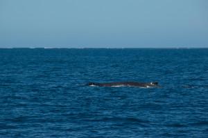 Baleines-0422-2