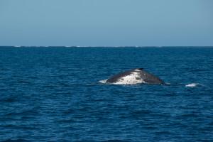Baleines-0423-2