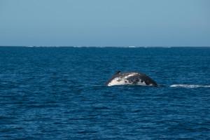 Baleines-0424-2