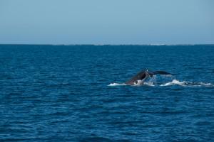 Baleines-0425-2
