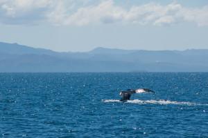 Baleines-0437