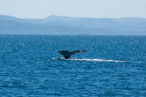Baleines-0438