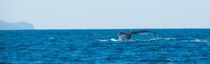 Baleines-0452