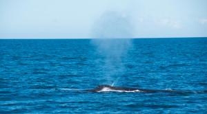 Baleines-0458