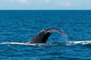 Baleines-0460