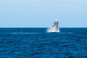Baleines-0463-2