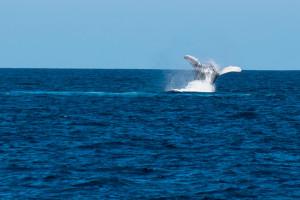Baleines-0464-2